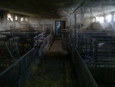 Liquidation of cowsheds and piggeries